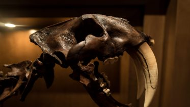 10 animales extintos en la actualidad