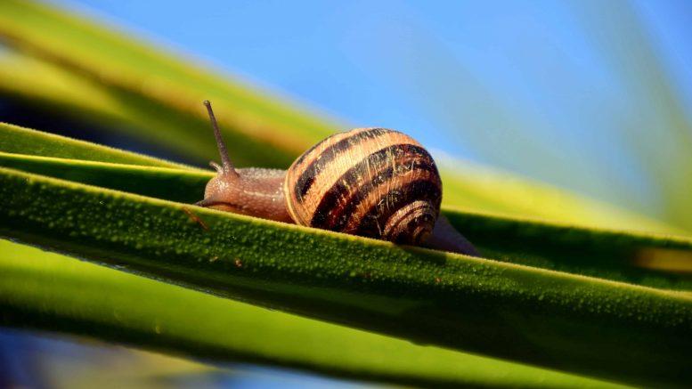 Cómo eliminar los caracoles de las plantas