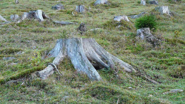 Cómo reducir la deforestación