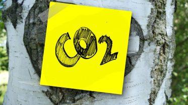 Cuál es el ciclo del carbono