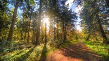 Cuál es la distribución del bosque templado