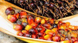 Qué productos contienen aceite de palma