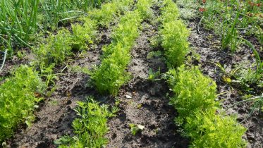 Qué significa fertilizante orgánico