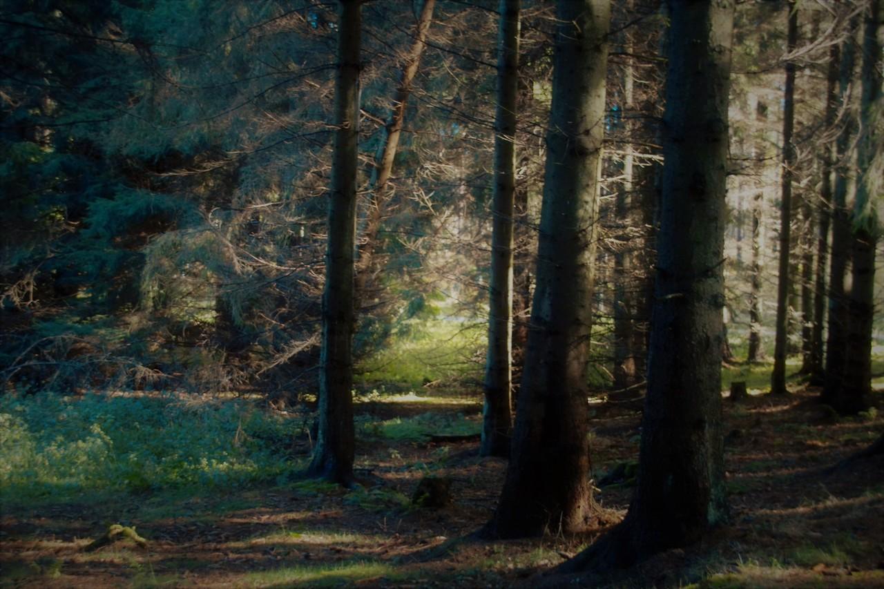 Relieve del bosque templado