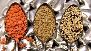 Cuáles son las mejores semillas comestibles