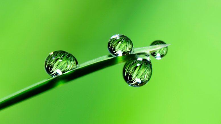Cuál es la función de los cloroplastos