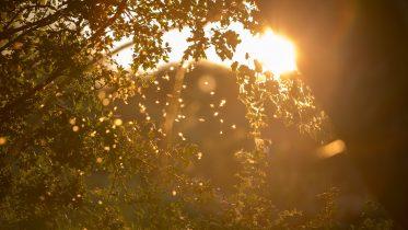 Cuál es la importancia de la luz del sol