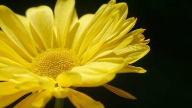Cuáles son las plantas angiospermas y gimnospermas