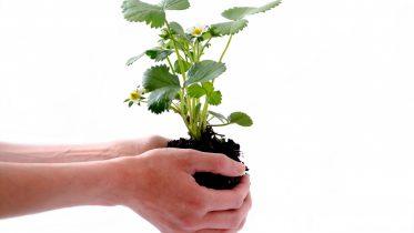Los mejores proyectos ecológicos