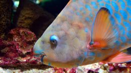 Qué comen los peces en el mar