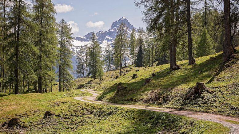 Qué es un ecosistema forestal