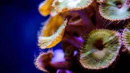 Qué plantas marinas hay en el mar