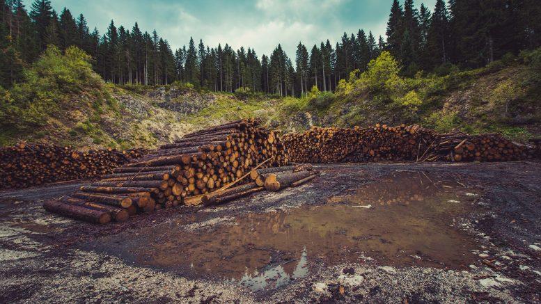 Soluciones para la deforestación