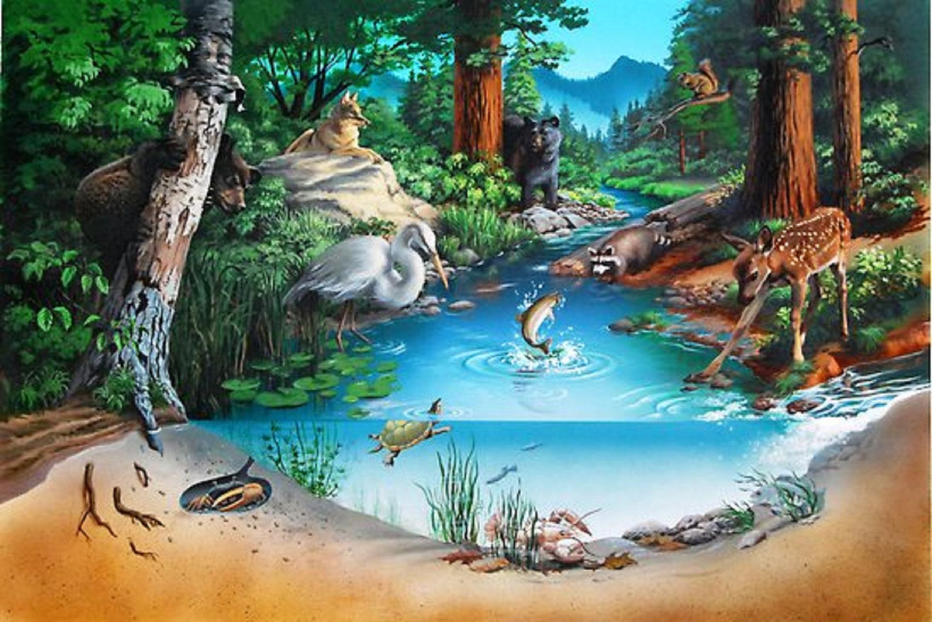 Tipos de ecosistemas | Revista Ambiente