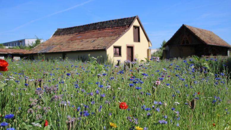 Ventajas de vivir en el campo