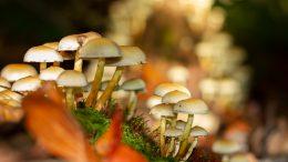 Características de los hongos