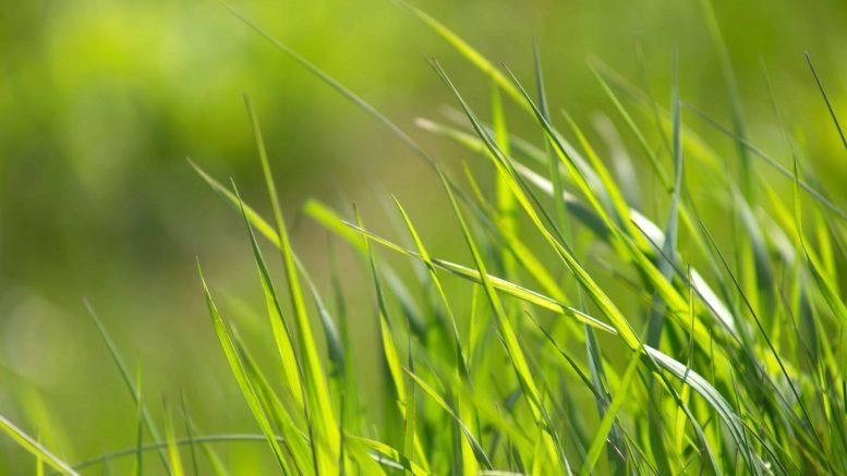 Consejos Para Cuidar El Césped De Manera Ecológica