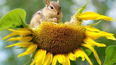 Cuáles son los tipos de la biodiversidad