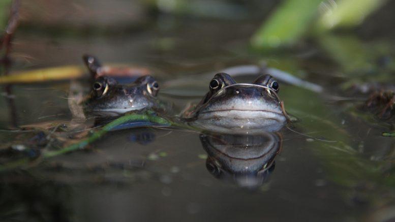 Dónde se encuentran los ecosistemas de agua dulce