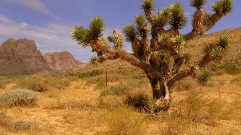Flora y fauna del desierto