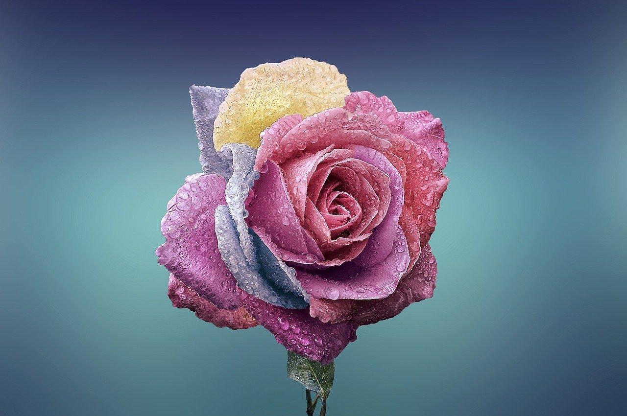 Tipos de rosas que existen