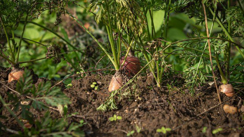 Prácticas de la agricultura sostenible