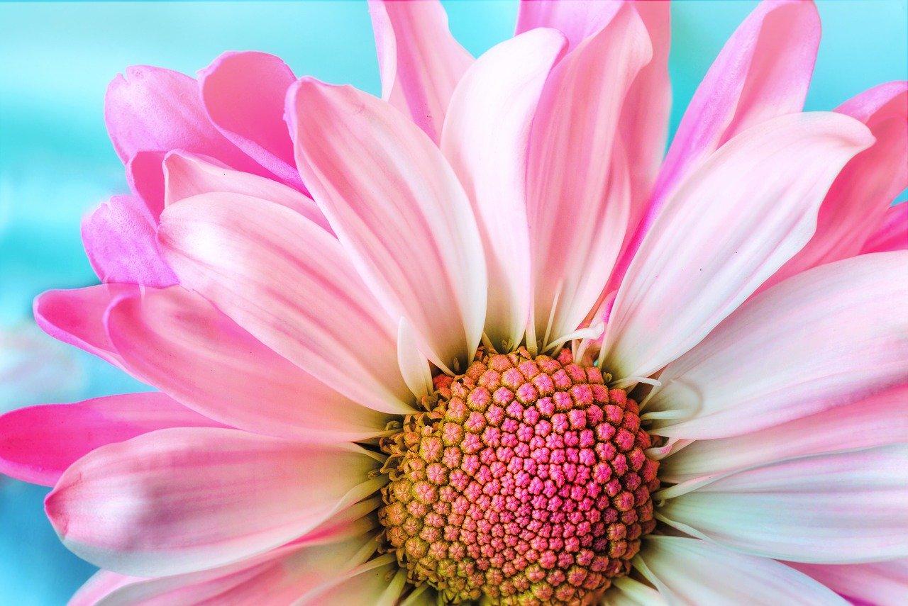 Tipos de Flores Rosas