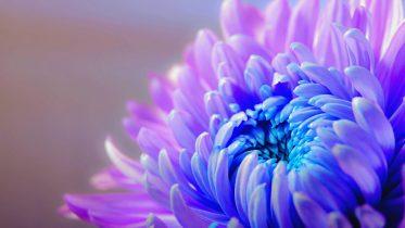 Tipos de Flores Según Su Color