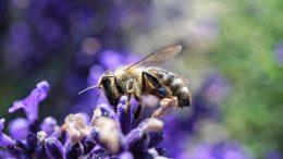 Cómo cuidar la biodiversidad
