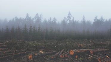 Cuáles son las principales causas de la deforestación