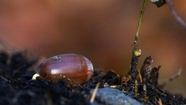 Por qué es importante la fertilización del suelo
