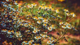 Arbustos con flores más populares en los jardines