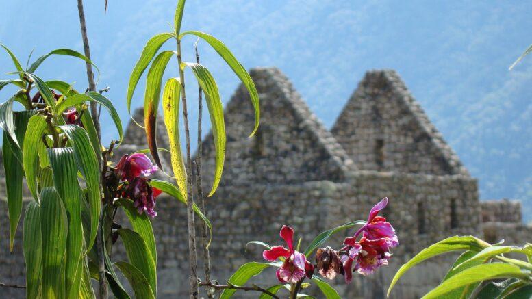 Cuántos tipos de plantas hay en Perú