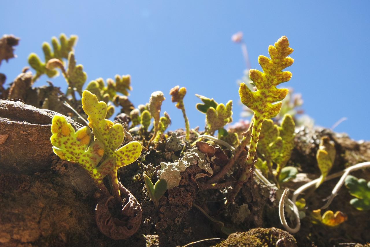Plantas en Perú